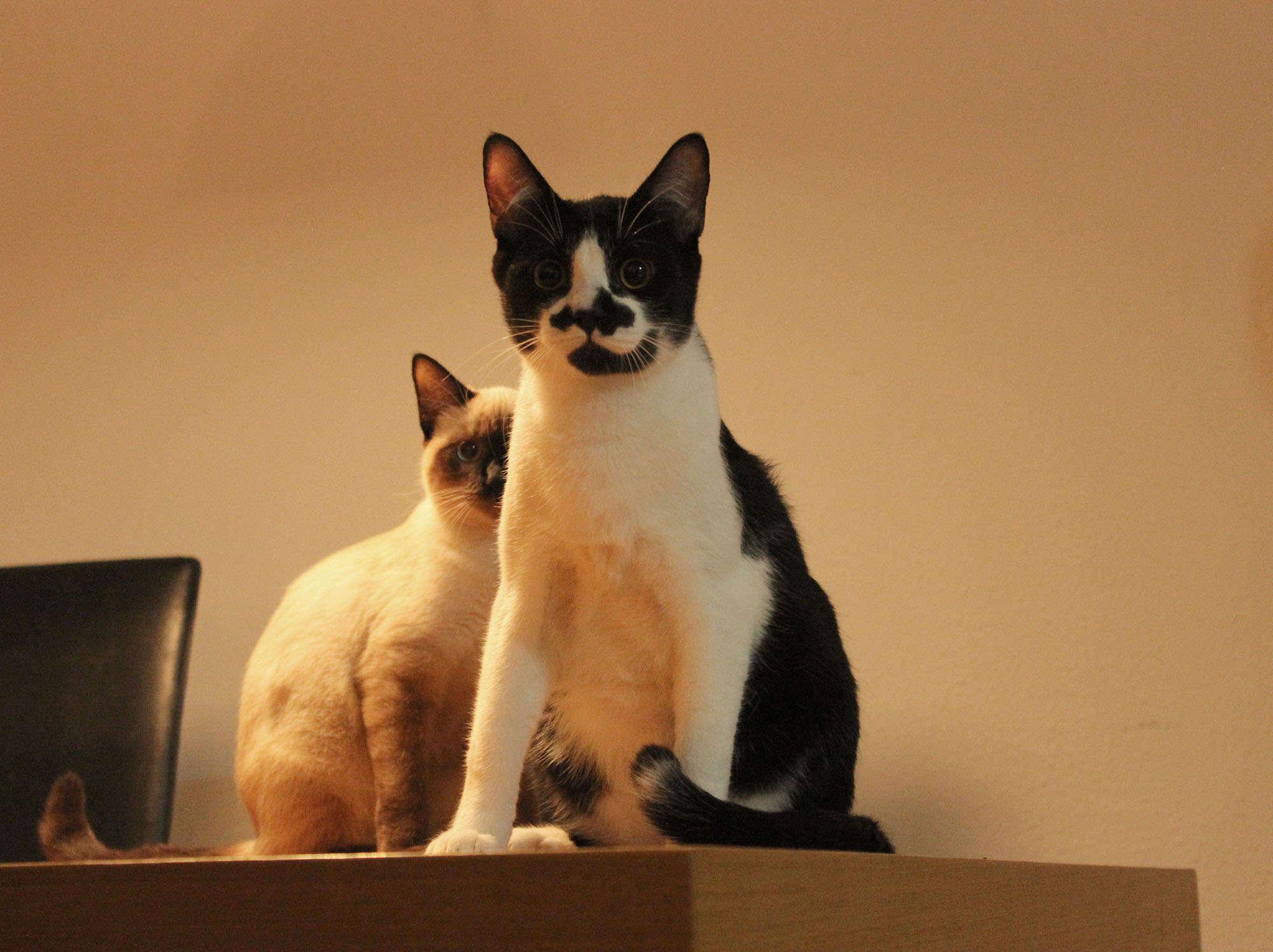 foto dos gatos Pio e Nicole