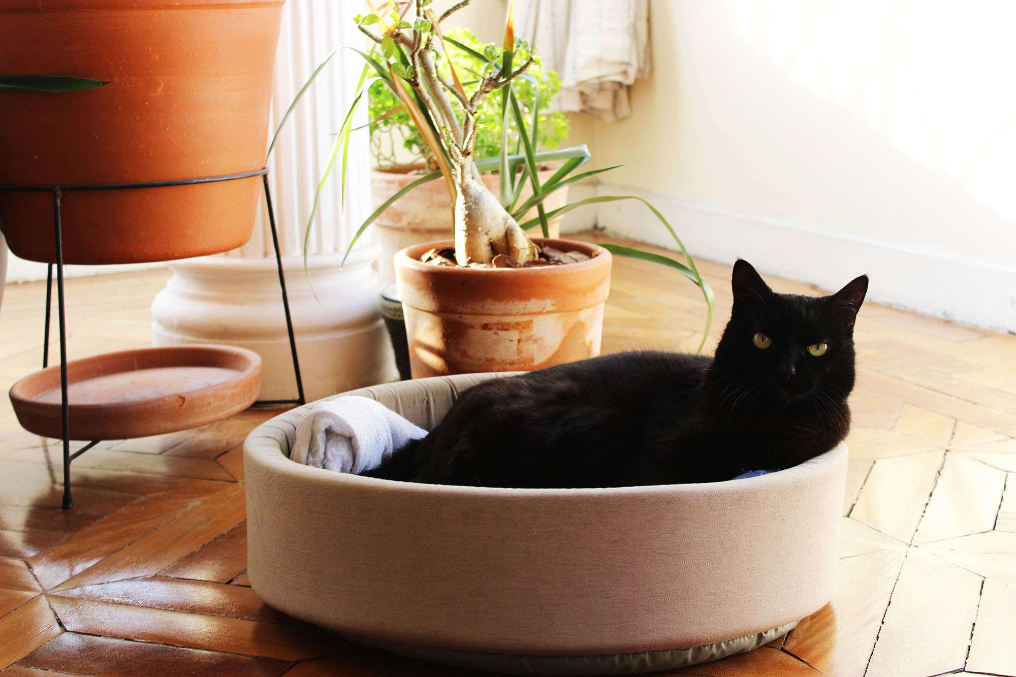 foto da gata Ágata vira-lata adotada de 13 anos