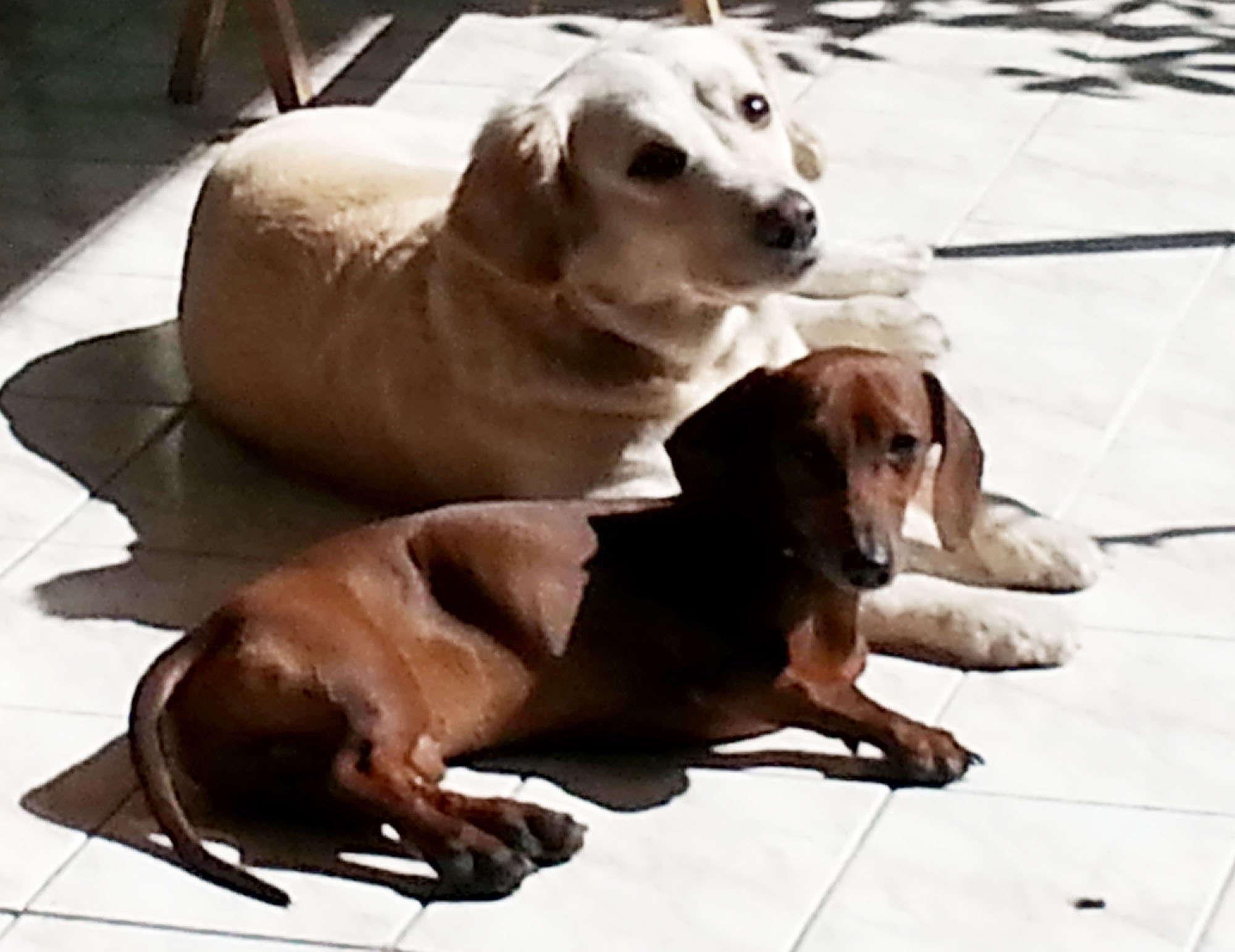 Chico e Barthô, 6 e 3 anos, Pirituba
