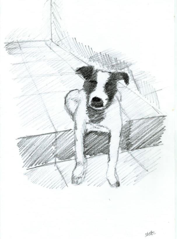 Cachorra Nina